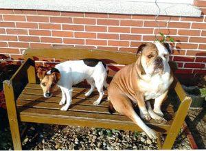 Hunde auf Bank
