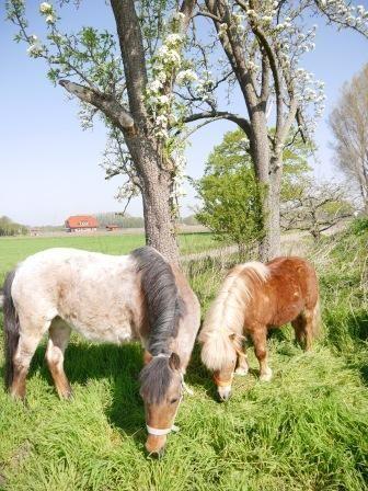 zwei süße Ponys